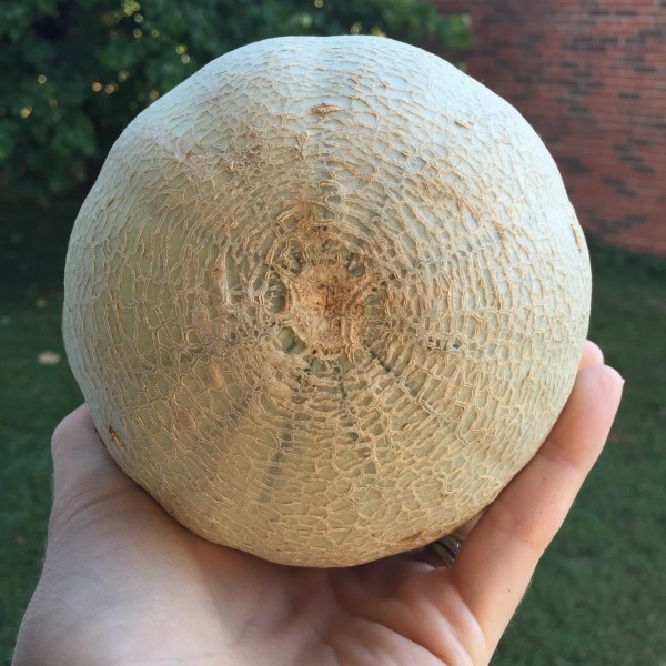 Cantaloupe and God's faithfulness at www.annswindell.com